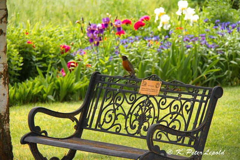 A bird on the bench at Benvoulin gardens.
